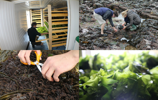 Our Seaweed Harvesting Courses are here!