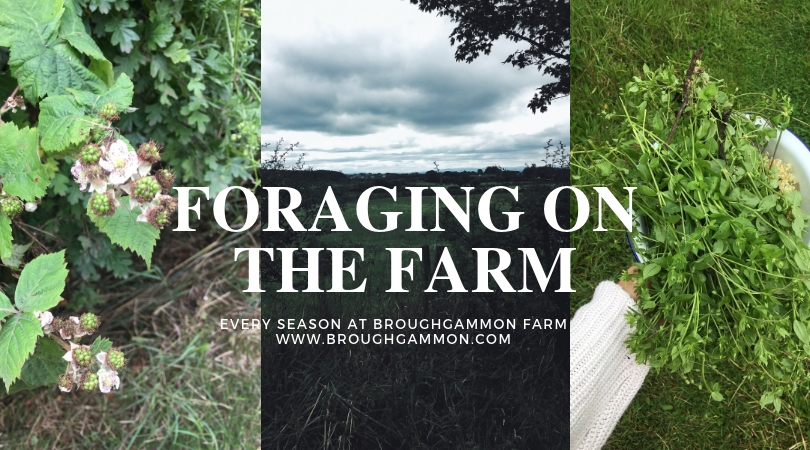 Foraging on the Farm-Northern Ireland